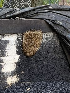 Close up of bee hive on our EZ Street Asphalt wall!