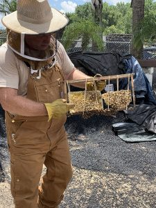 Bee Keeper showing part of the honey comb used to safely move the bees.